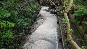Sewage pollution in the Wealdstone Brook in Woodcock Park, Brent